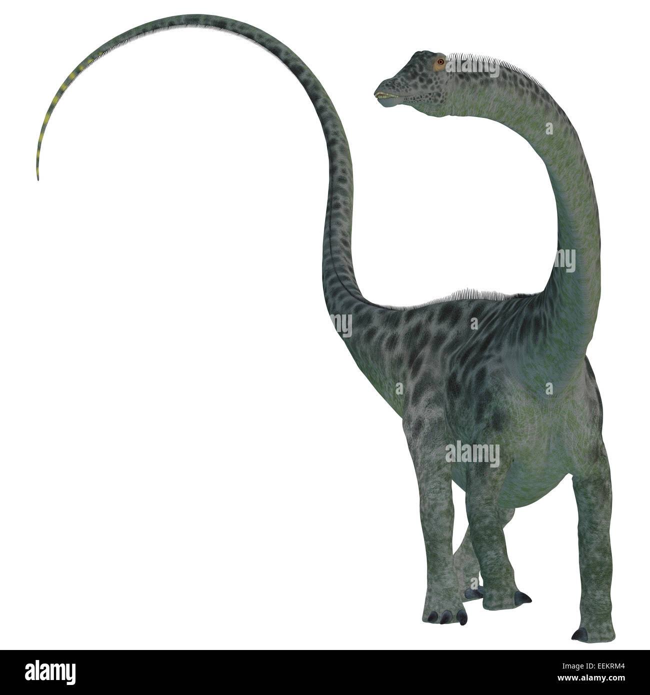 Diplodocus was a sauropod herbivorous dinosaur that lived in the Jurassic Era of North America. - Stock Image