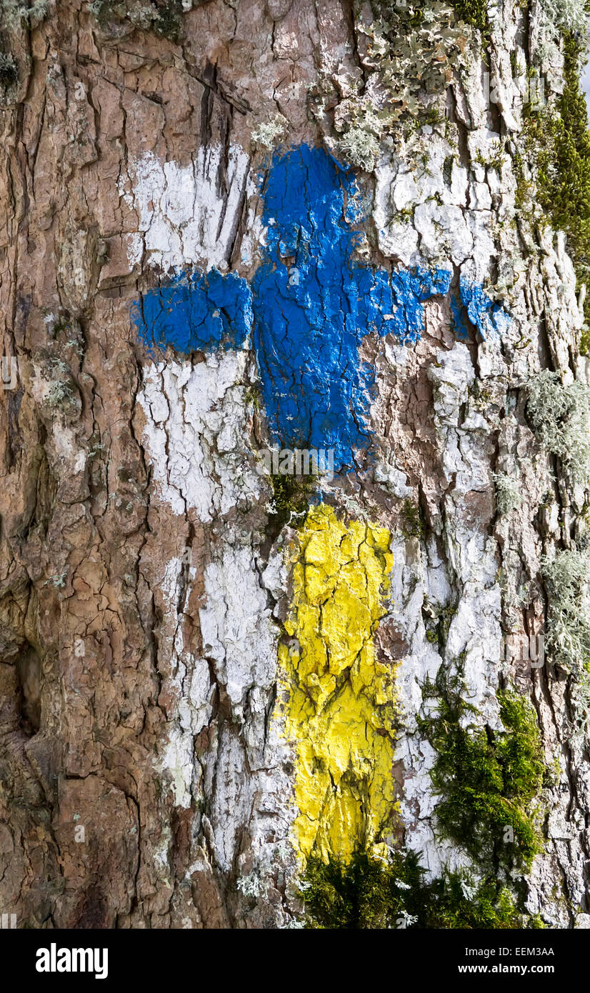 Two trail guiding signs for tourist orientation painted in vivid colors on a tree trunk, close-up - Stock Image