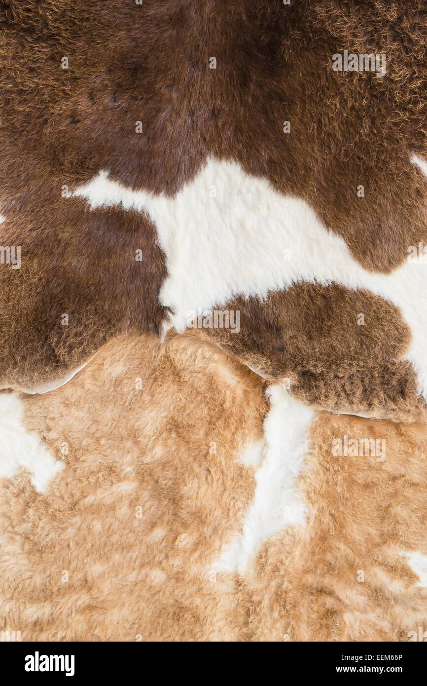 Natural animal skin , stretched and tanned with brown color variations , background - Stock Image