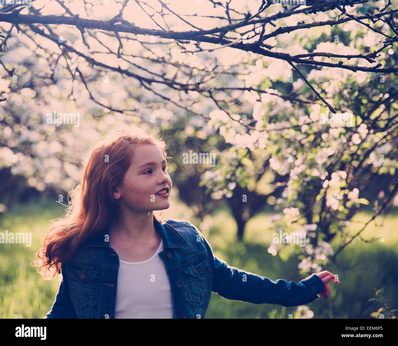 Girl walking through orchard in blossom - Stock Image