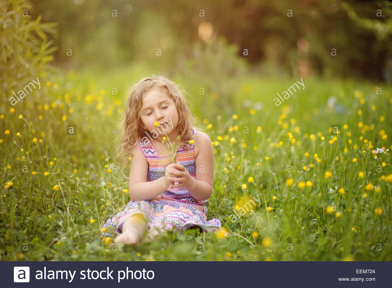 Girl (4-5) smelling wildflowers in meadow - Stock Image