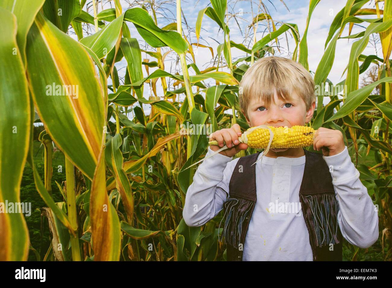 Boy (4-5) eating corn among corn crop - Stock Image