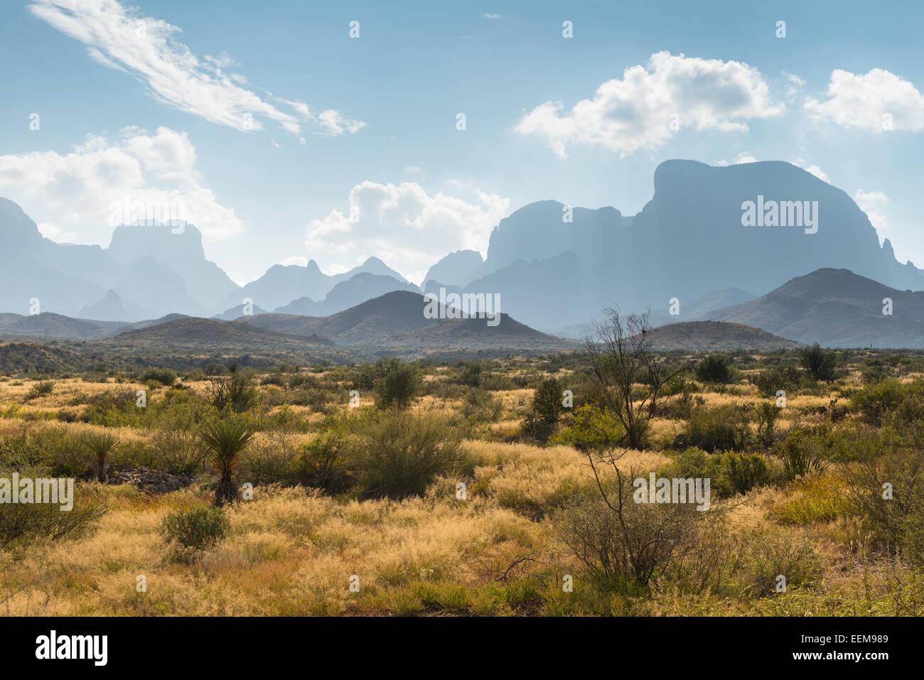 USA, Texas, Big Bend National Park, Desert landscape - Stock Image
