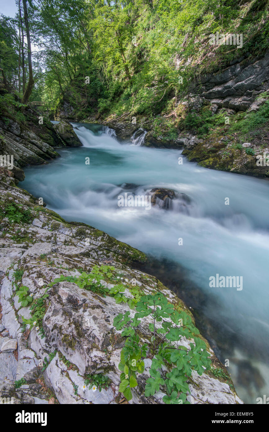 Blurred view of rocky creek in forest - Stock Image