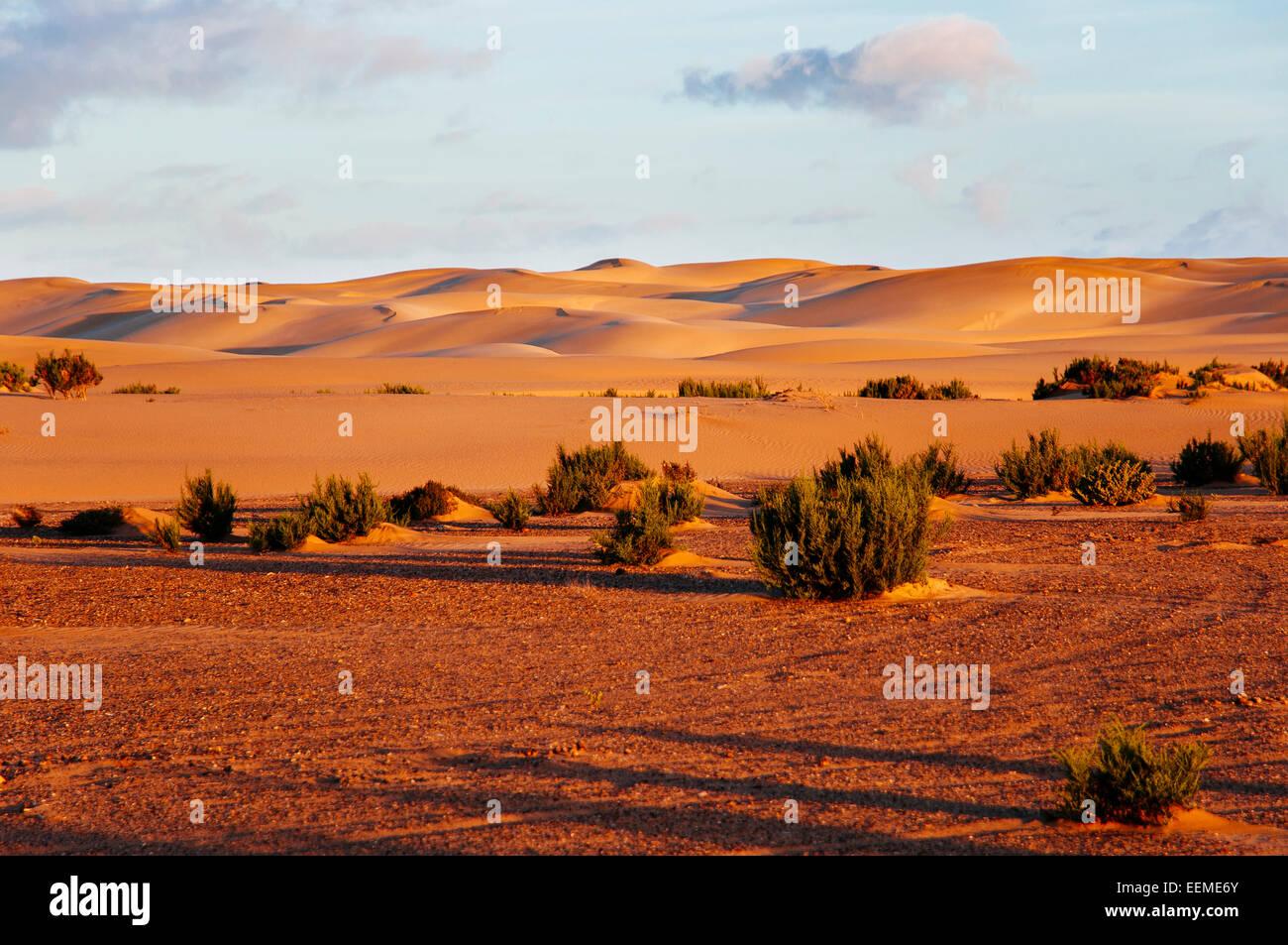 Sand dunes in Sahara desert, Western Sahara, Morocco. - Stock Image
