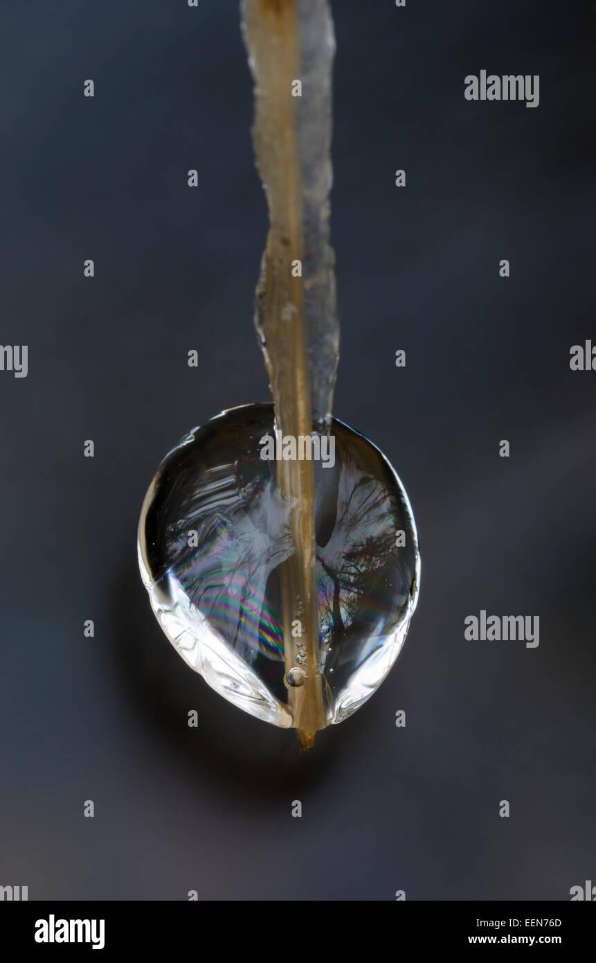 ice detail on a grass stalk, Hedmark Fylke, Norwegen, November - Stock Image