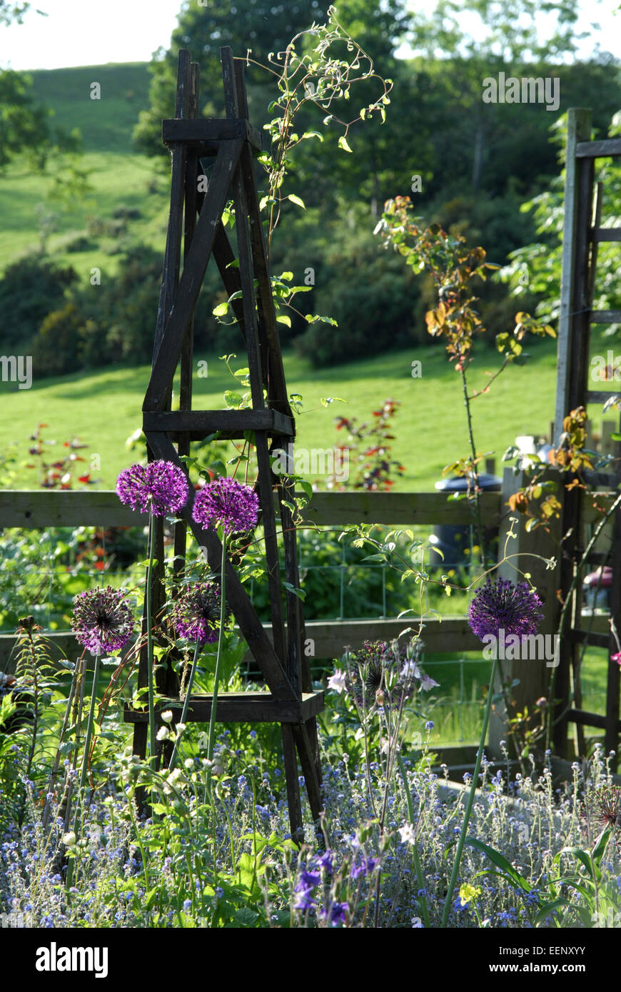 Mixed border in spring includes Allium flowers.  Grazing fields beyond. - Stock Image