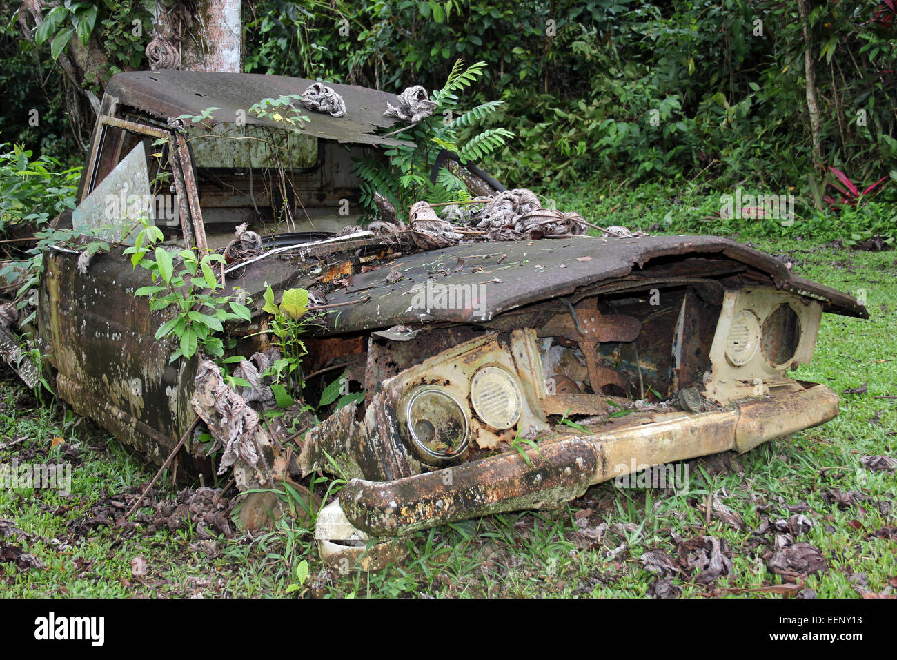 Decrepit rusting old J10 Jeep pickup truck being reclaimed by nature with ferns and plants growing from it - Stock Image