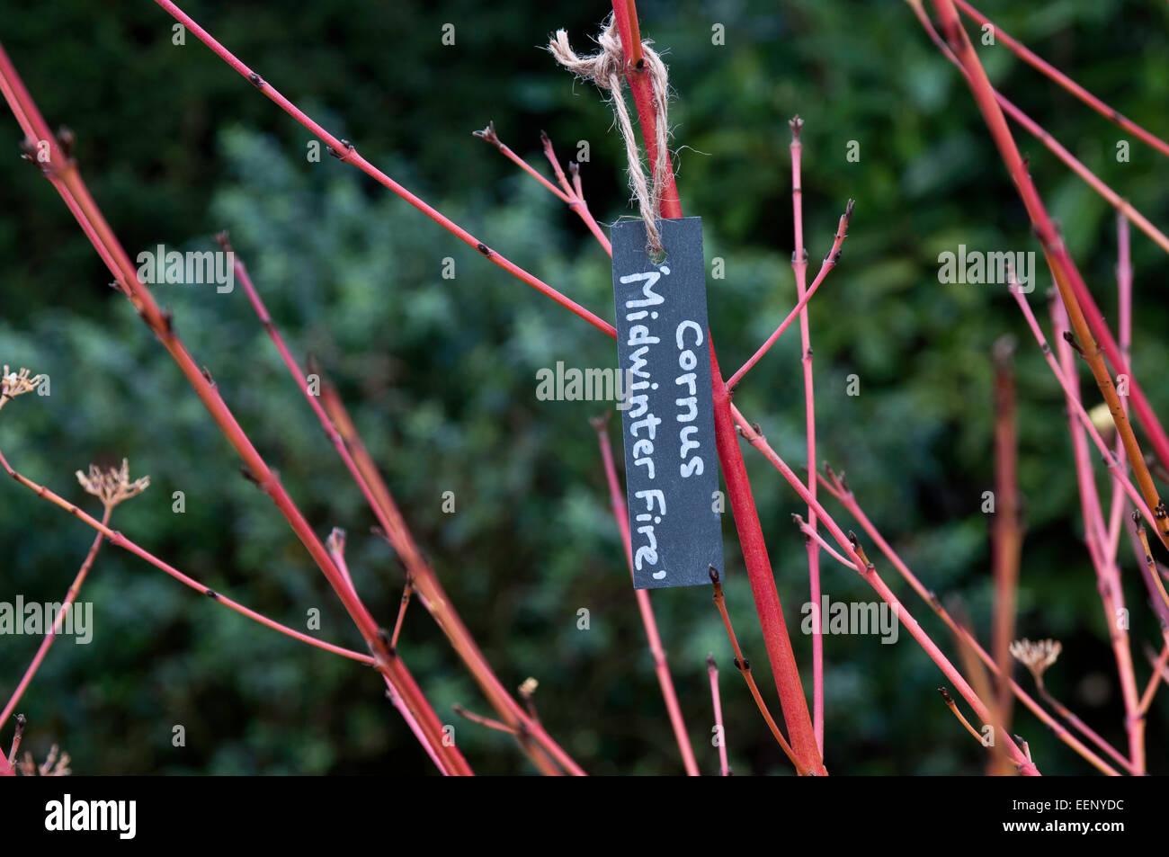 Hanging slate plant label - Stock Image