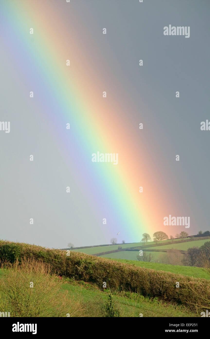 Impressive rainbow looking east from Bradninch, Devon - Stock Image