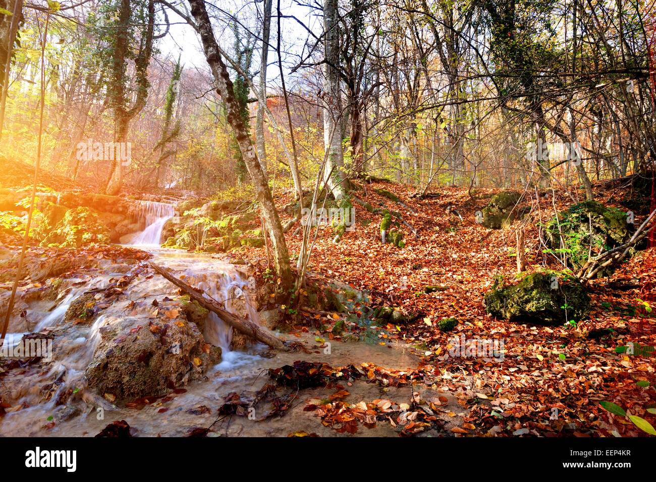 Creek in autumn mountain forest at sunrise - Stock Image
