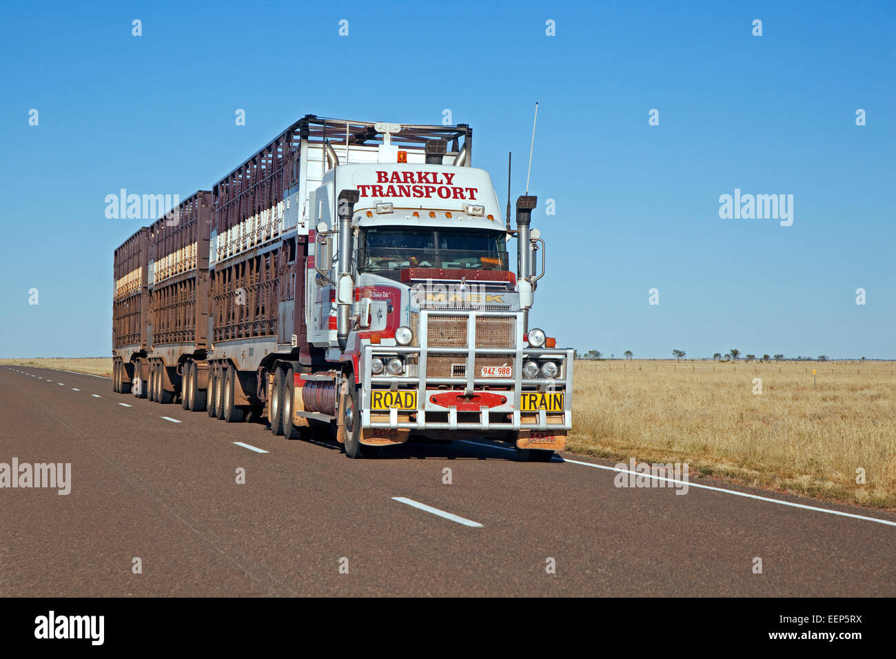 Cattle transport by triple road train fitted with roo bar on the Barkly Highway, Northern Territory, Australia - Stock Image
