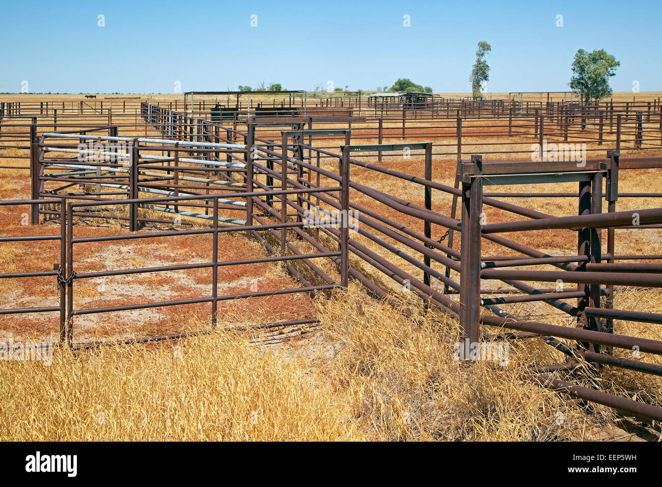 Metal gates of pen / corral at cattle station in the Australian outback, Northern Territory, Australia - Stock Image