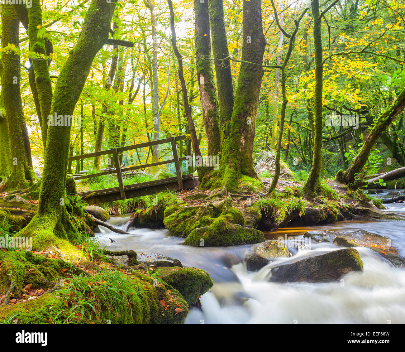 Small bridge in the woods at Golitha Falls on the River Fowey Bodmin Moor Cornwall England UK Europe - Stock Image