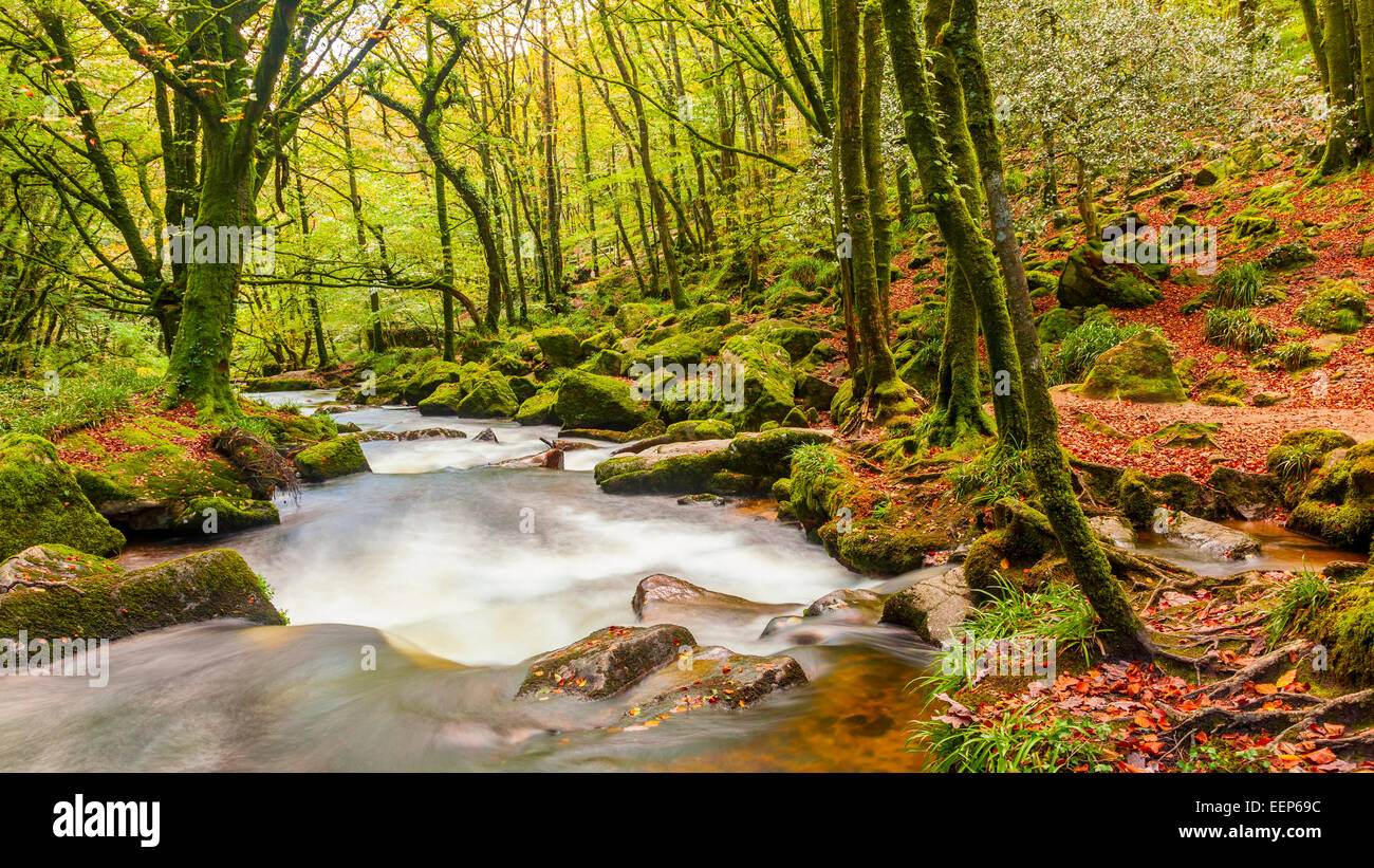 River Fowey at Golitha Falls nature reserve on the edge of Bodmin Moor Cornwall England UK Europe - Stock Image