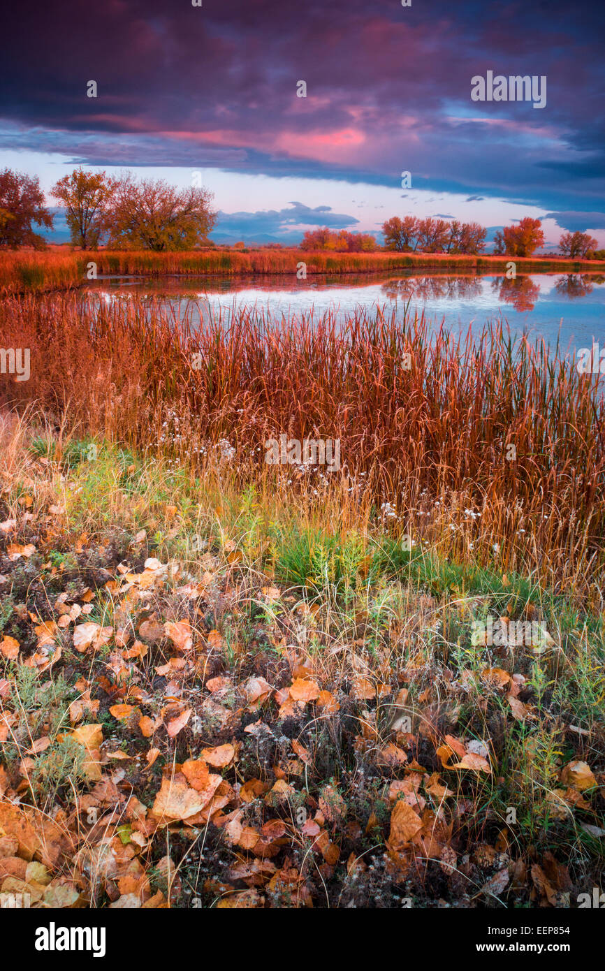 Colors of a morning sunrise paint the landscape over Lake Ladora in Denver, Colorado - Stock Image