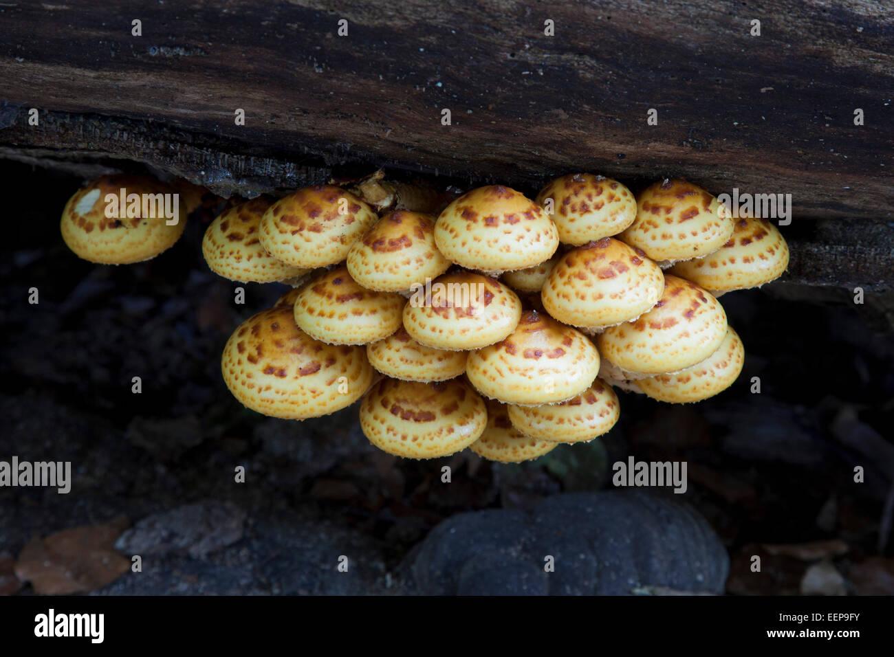 Unbekannter Pilz an Totholz - Stock Image