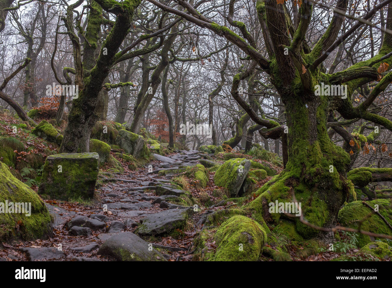Padley Gorge, Winters Walk - Green Trees and Rocky Path - Stock Image