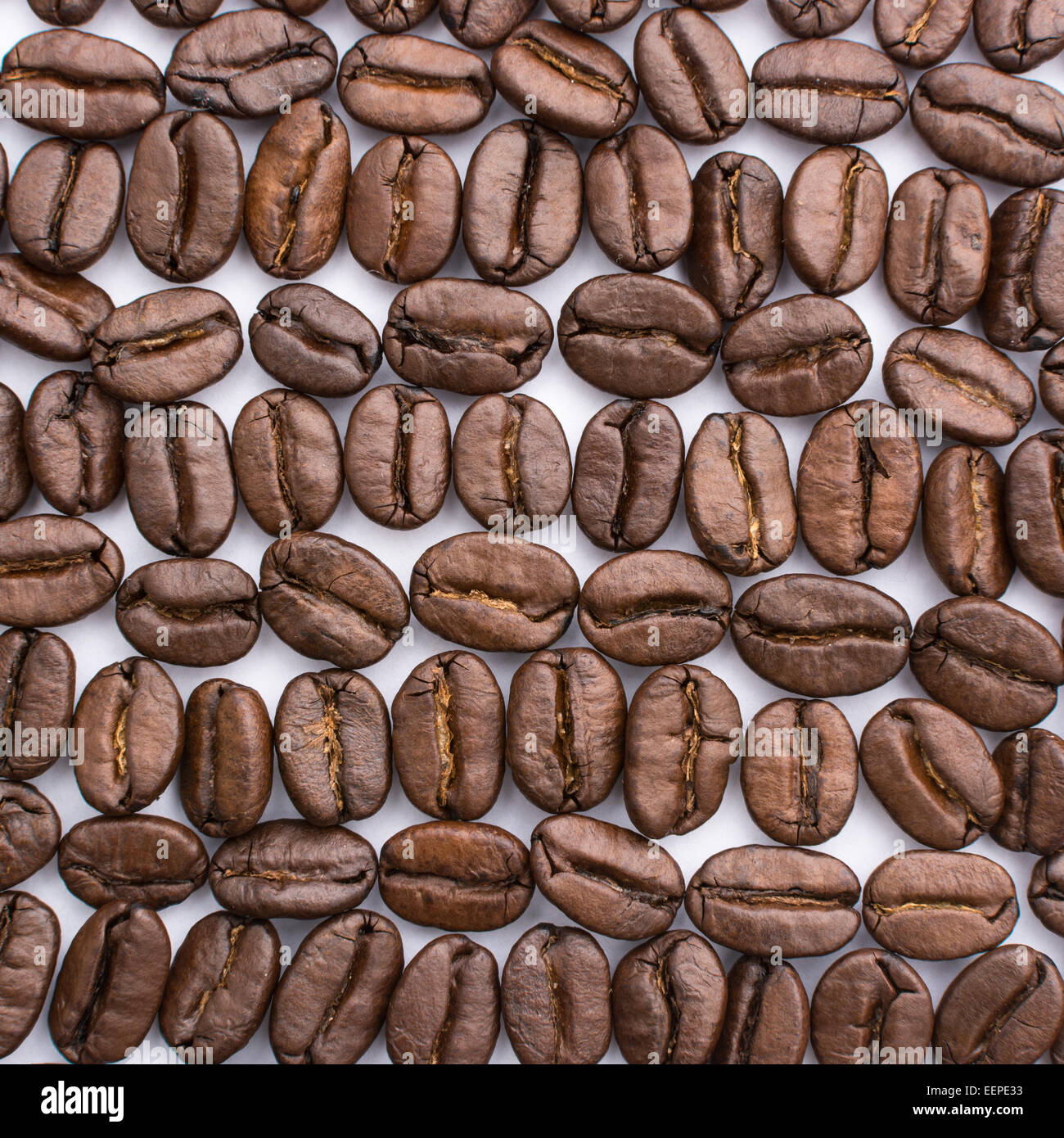 roasted coffee beans arranged into a regular pattern on white background - Stock Image
