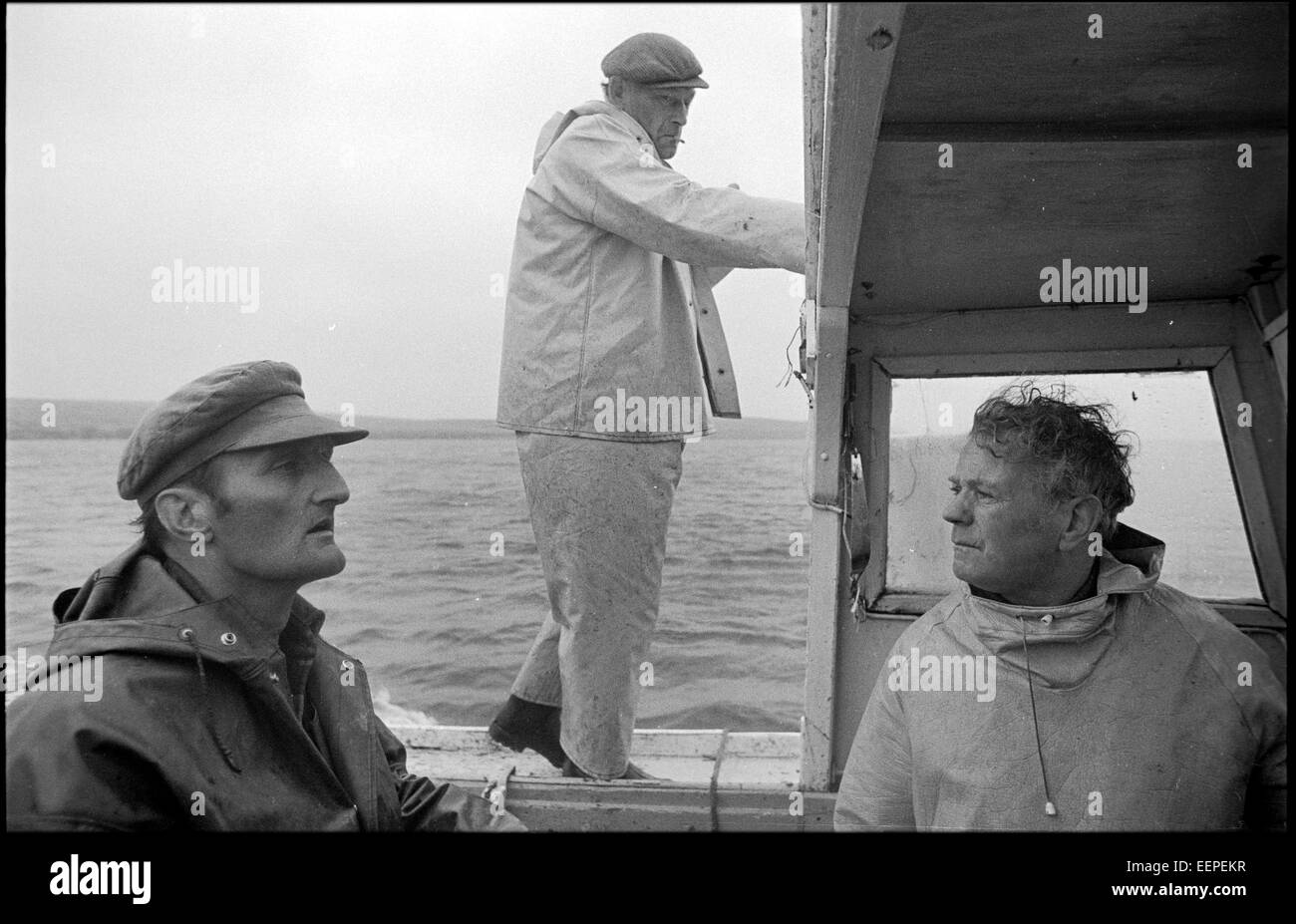 Boatmen bring the sheep in from outlying isles, Shetland. - Stock Image