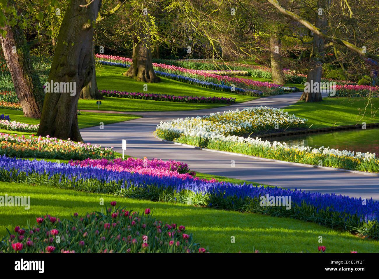 Path through Keukenhof Gardens, South Holland, Netherlands - Stock Image