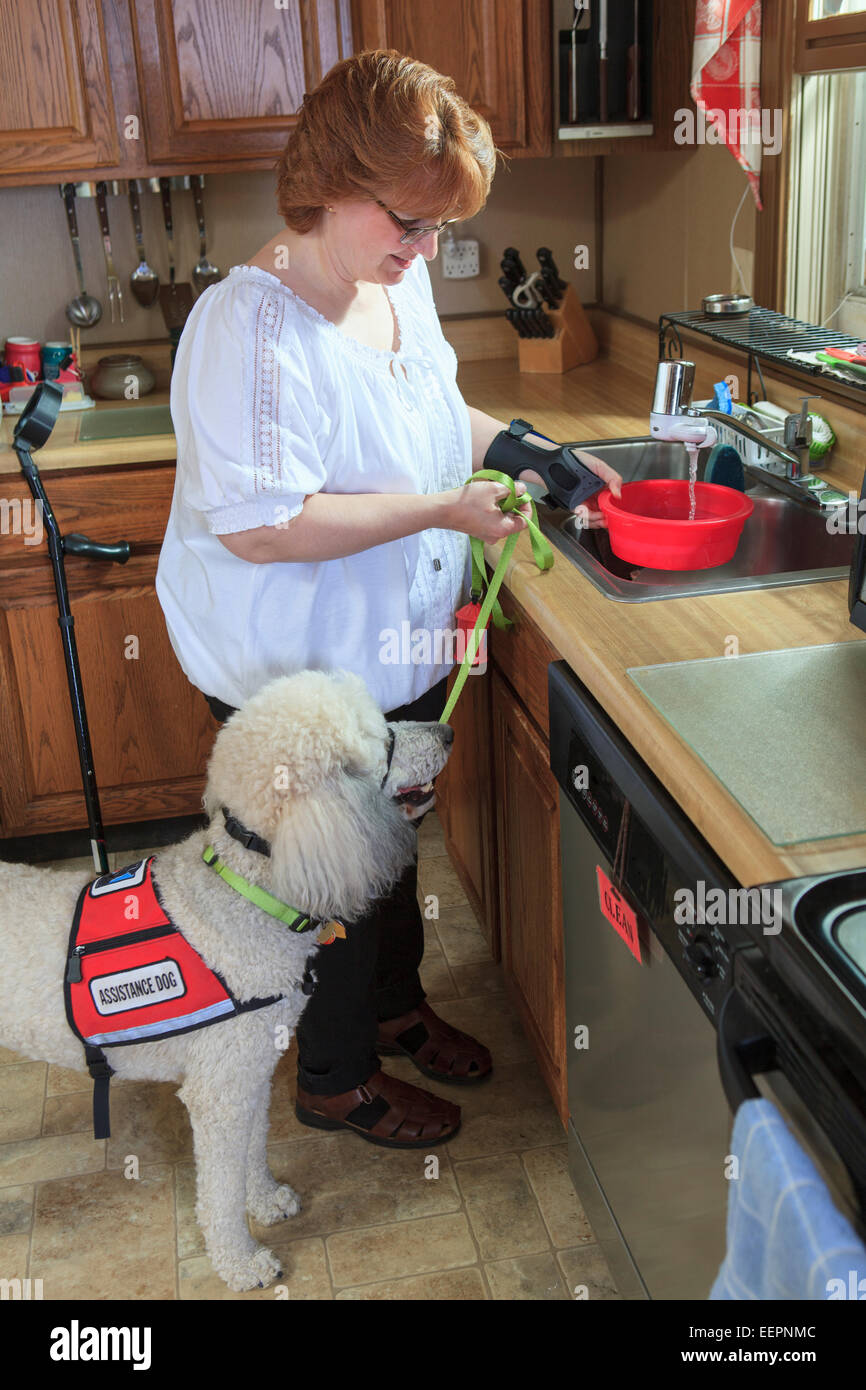 Poodle Service Dog With His Master At The Kitchen Sink