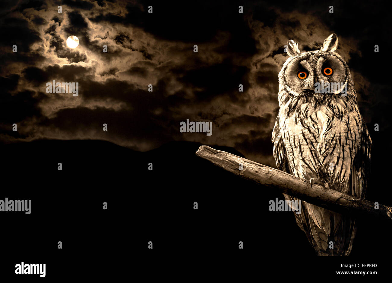 owl and full moon halloween abstract background - Stock Image