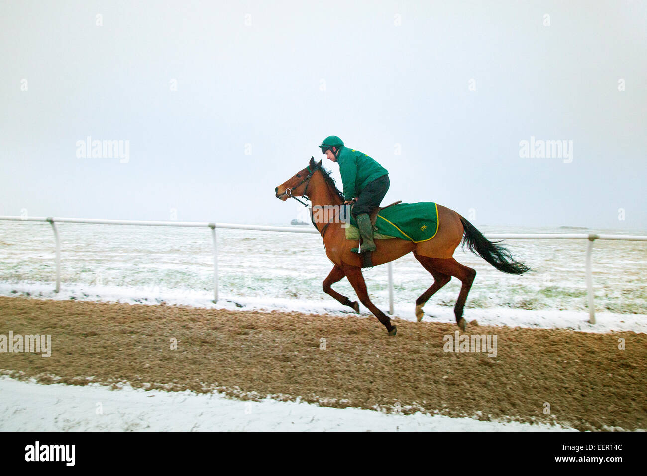 Horse cantering at Middleham, North Yorkshire, UK Wednesday 21st January, 2015. UK Weather.  Cold, icy and early - Stock Image