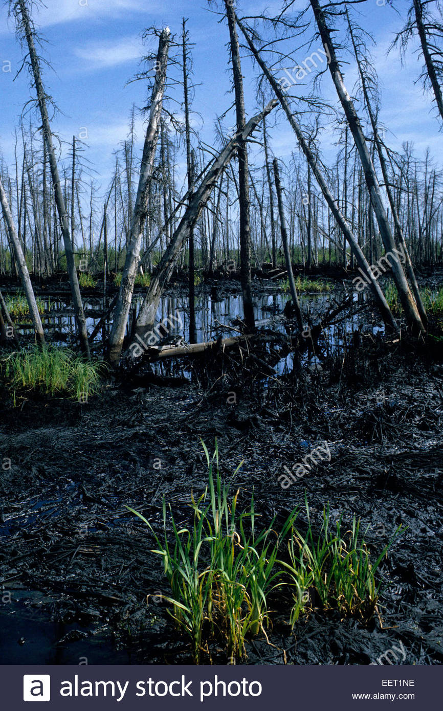 Oil flood polluting the environment, Russia. - Stock Image