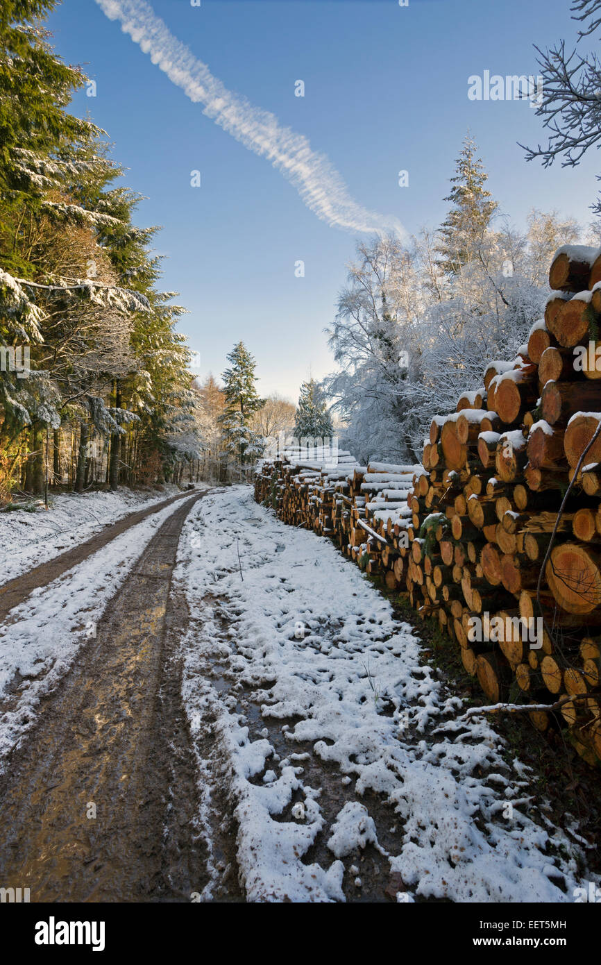 Softwood log stacks in a snowy forest - Stock Image