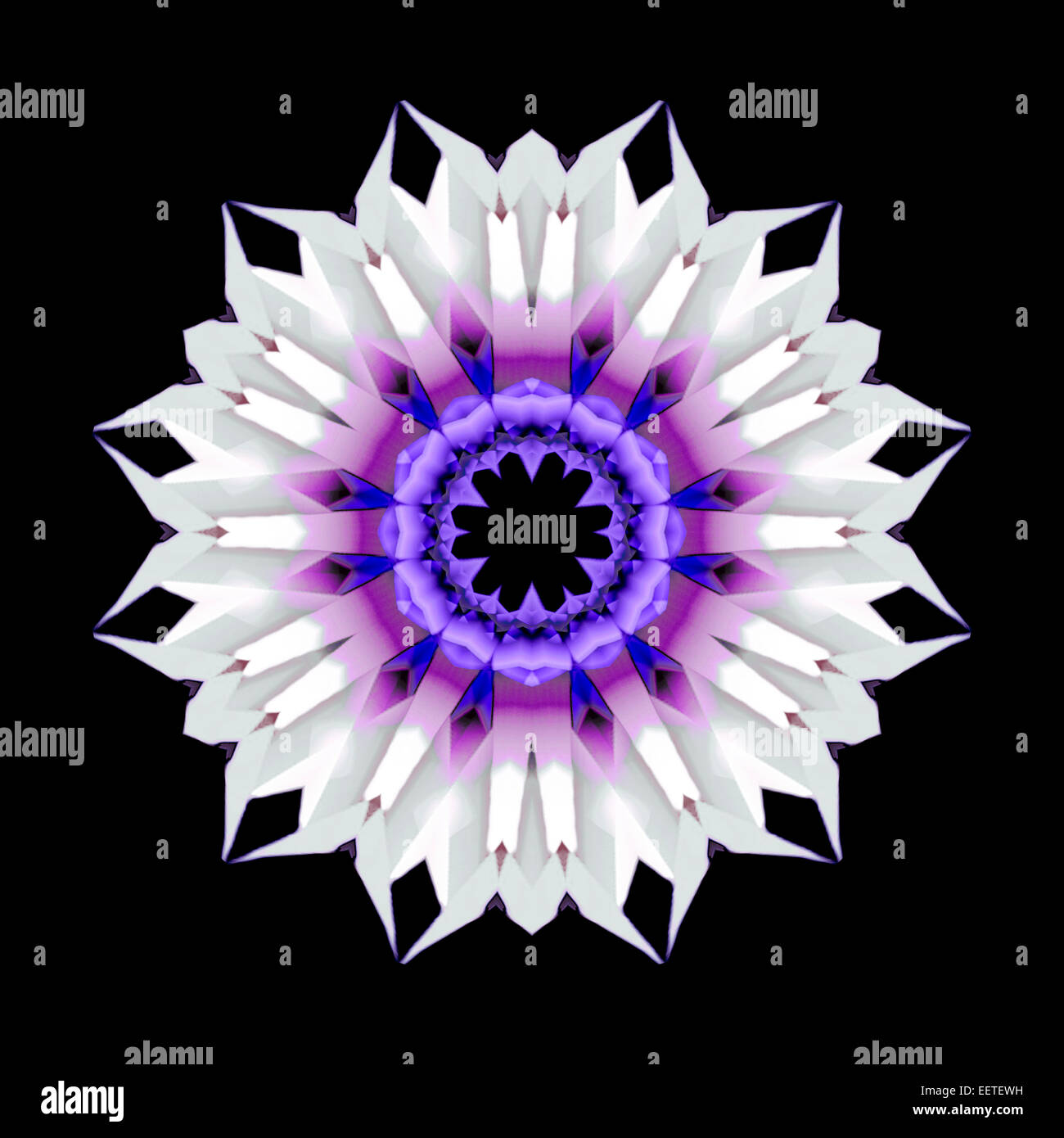 Purple Flower - Stock Image