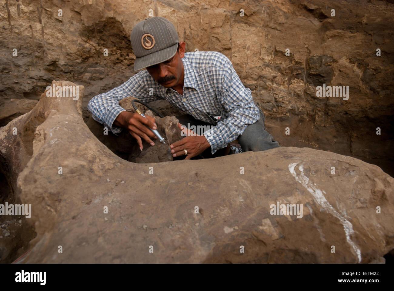 Palaeontologist Iwan Kurniawan excavating fossils of ancient elephant, Elephas hysudrindicus, in Blora regency, - Stock Image