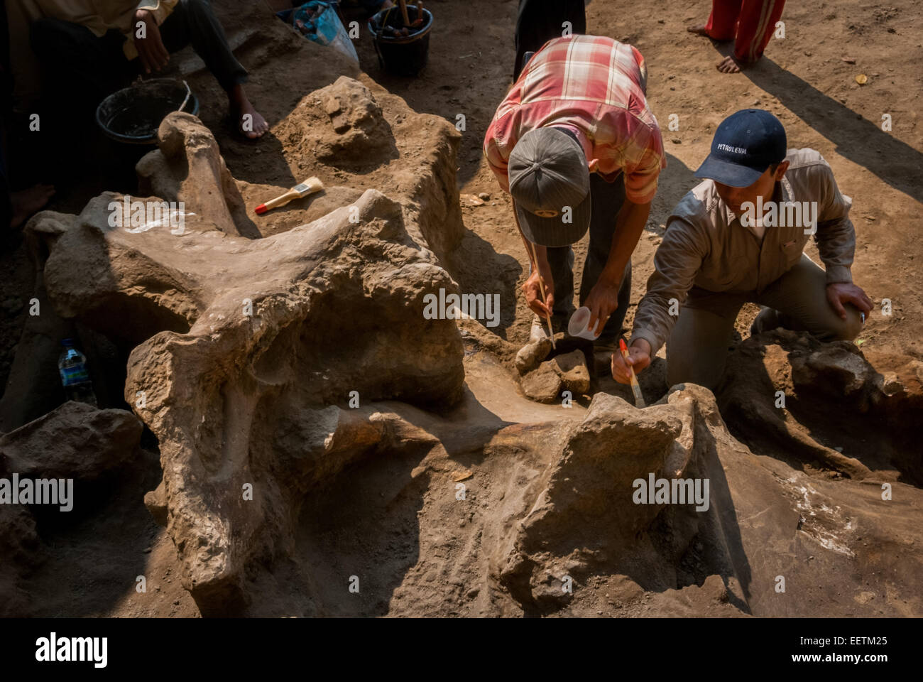 Indonesian palaeontologists excavating ancient elephant--Elephas hysudrindicus--fossils in Central Java. - Stock Image