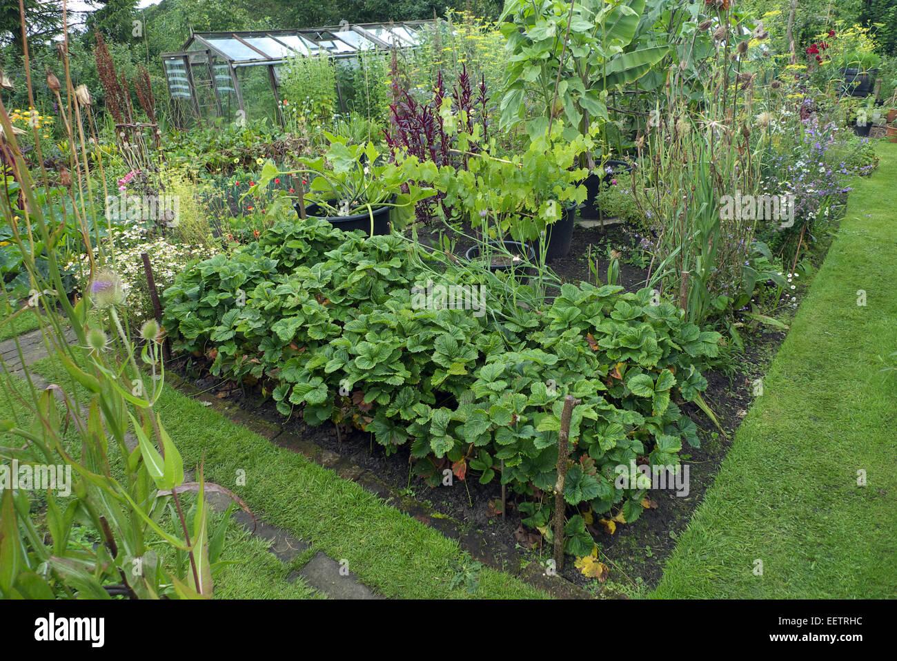 Ornamental organic kitchen garden, Cheshire, UK - Stock Image