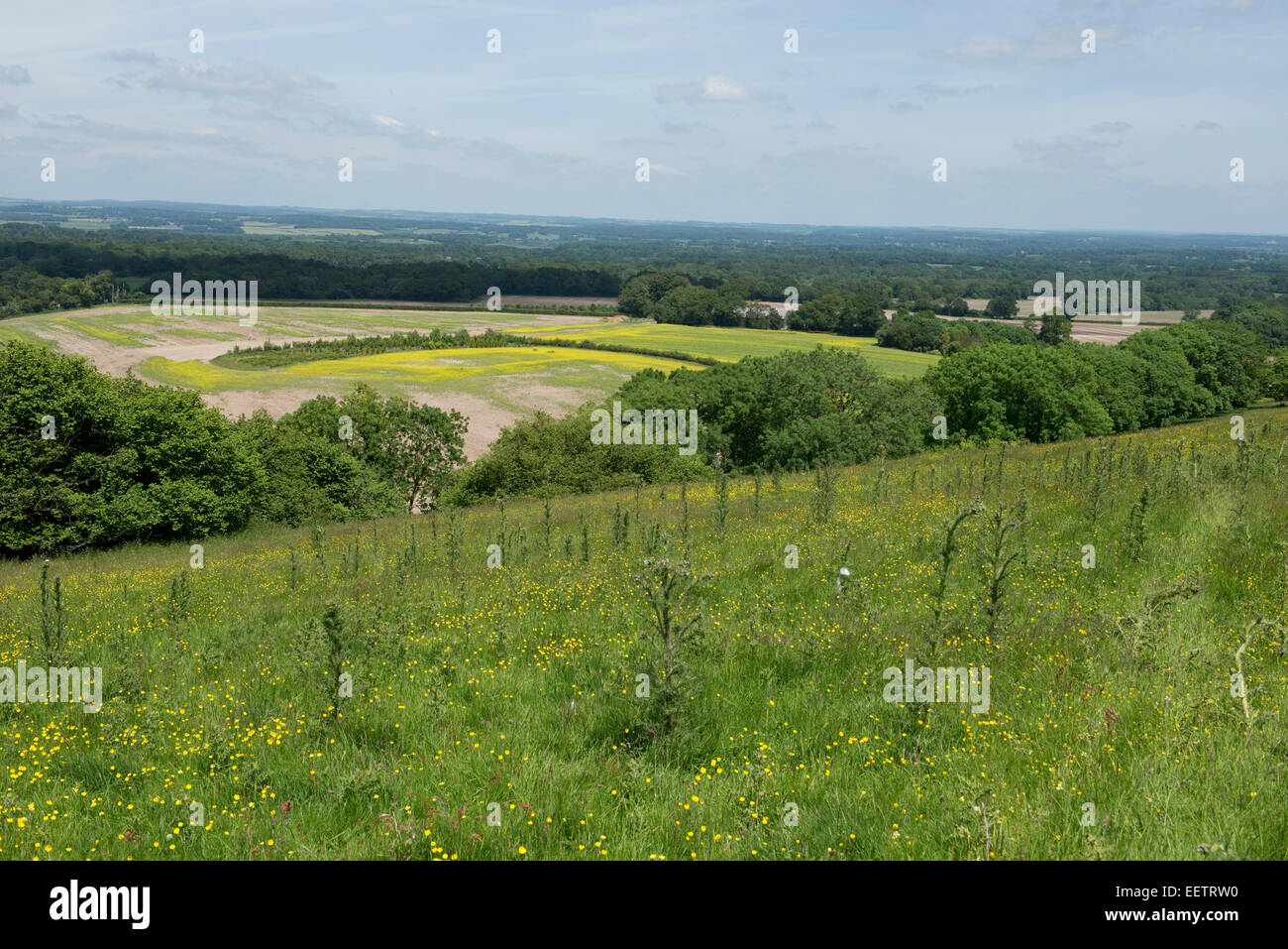 A downland meadow in summer with marsh thistles, Cirsium palustre, other flowering plants and a far reaching view. - Stock Image