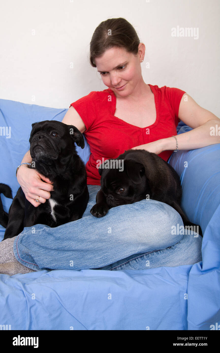 Woman cuddling her two black Pugs sitting on a sheet-covered couch in her home in Seattle, Washington, USA - Stock Image