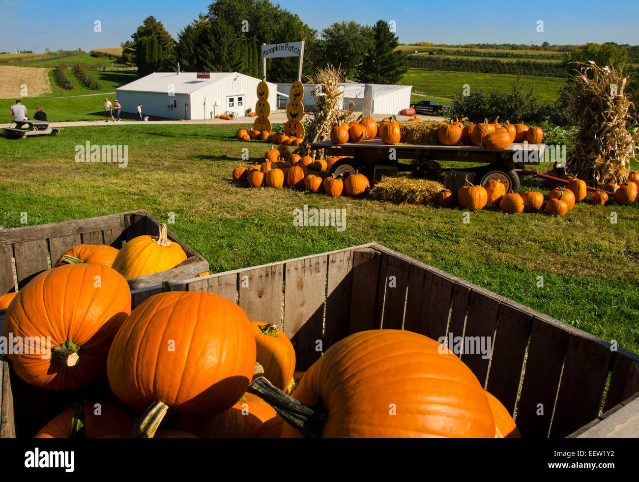 Pumpkins for sale at Shihata's Orchard and Apple House near Prairie du Chien, Wisconsin - Stock Image