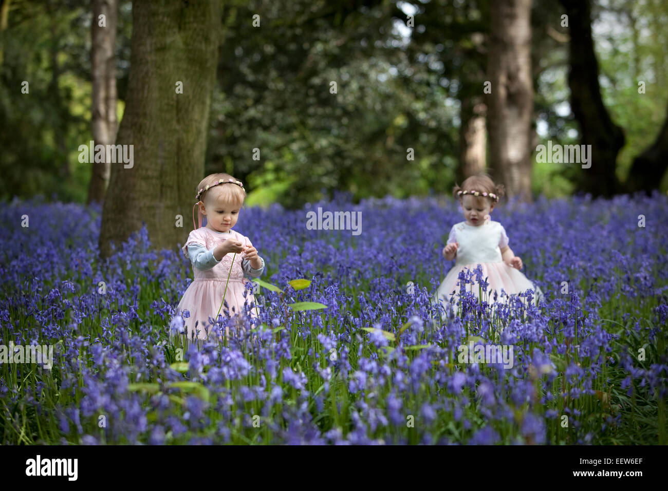 Two little girls exploring a wood full of wild bluebells in Spring. - Stock Image