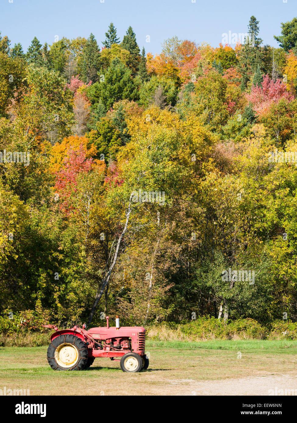 Old Massy Harris Tractor on a Autumn Day. An old red tractor below a colourful slope of fall colours. Stock Photo
