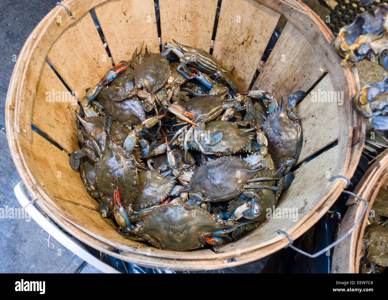 A peck of live crabs. A wooden basket keeps live crabs from escaping into the street at a fish monger's street - Stock Image