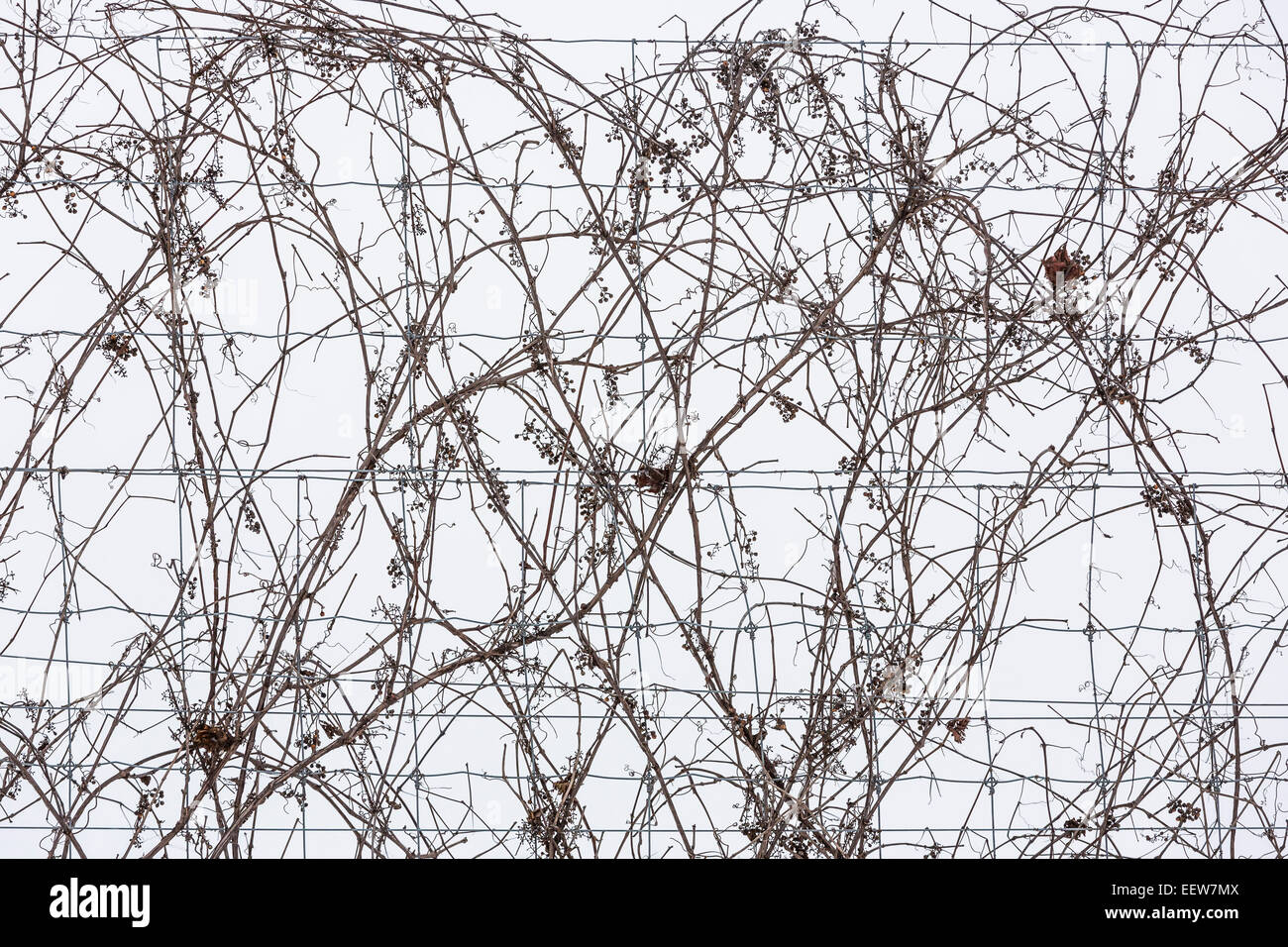 Dorable Pasture Woven Wire Fence Embellishment - Electrical Diagram ...