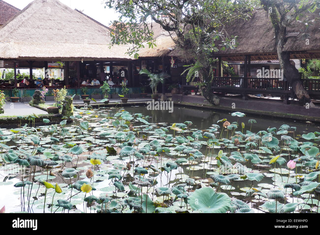 Lotus cafe and Lotus pond situated in front of the Pura Taman Saraswati, Ubud, Bali. - Stock Image