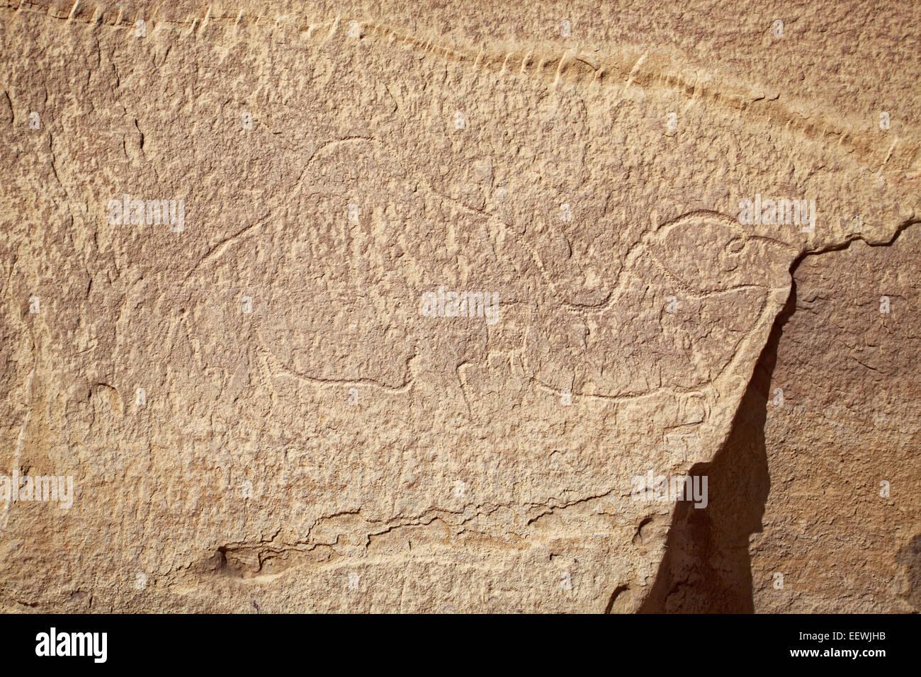 Prehistoric rock carving, camel, desert, Wadi Rum, Jordan Stock Photo