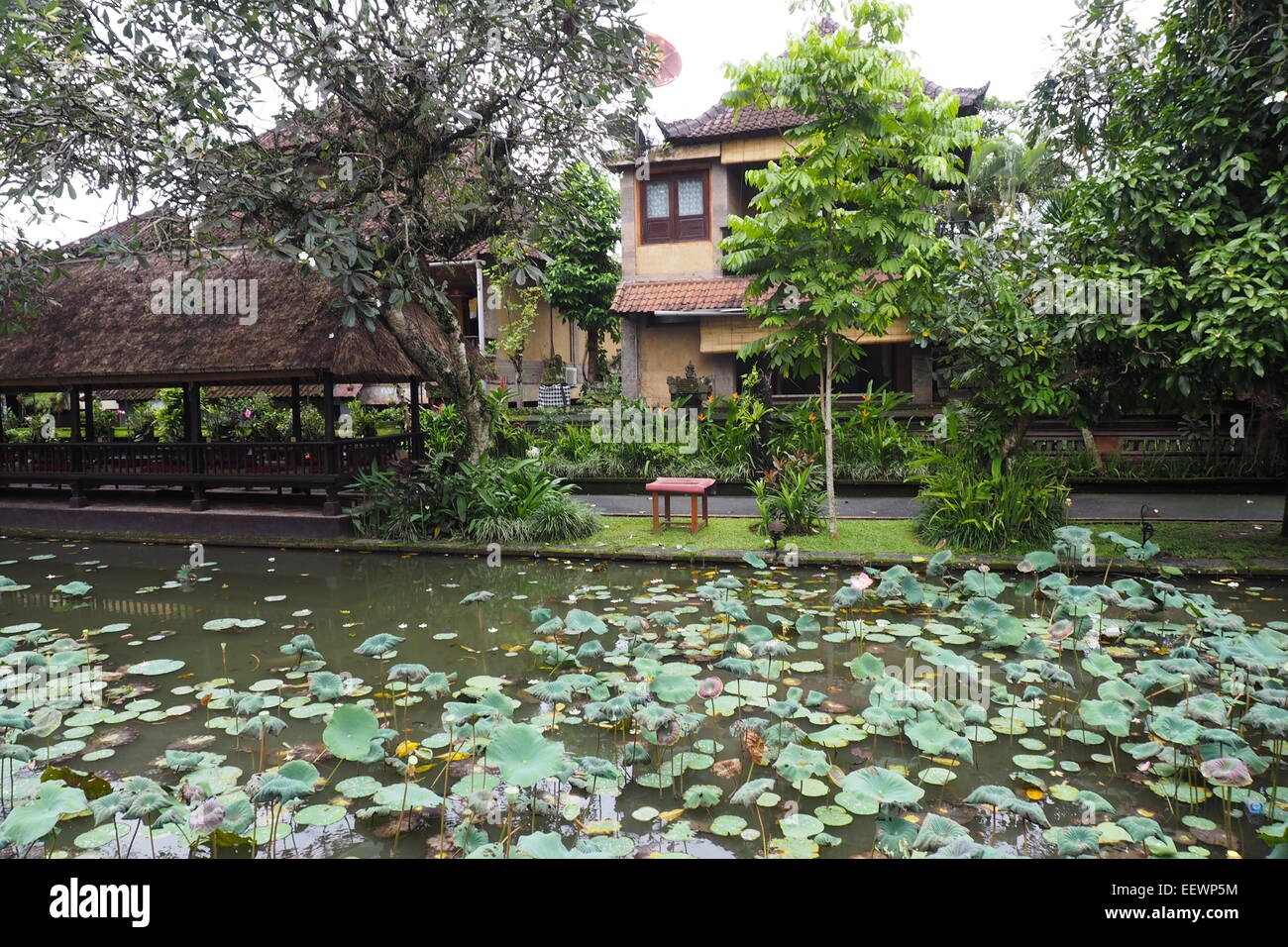 Lotus pond situated in front of the Pura Taman Saraswati, Ubud, Bali. - Stock Image