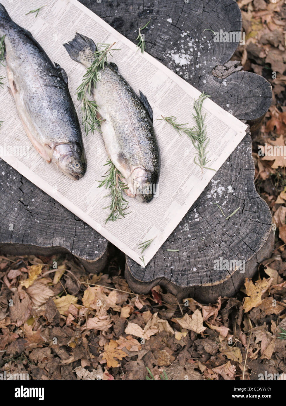 Two fish lying on a tree trunk. - Stock Image