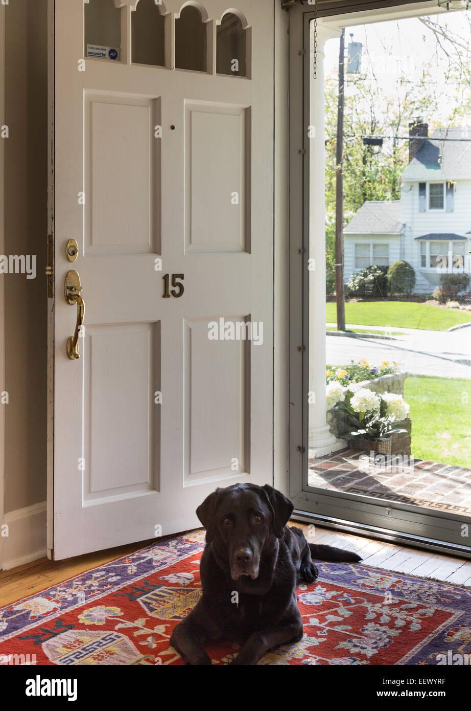Dog Sitting In Door Entrance Stock Photos Dog Sitting In Door