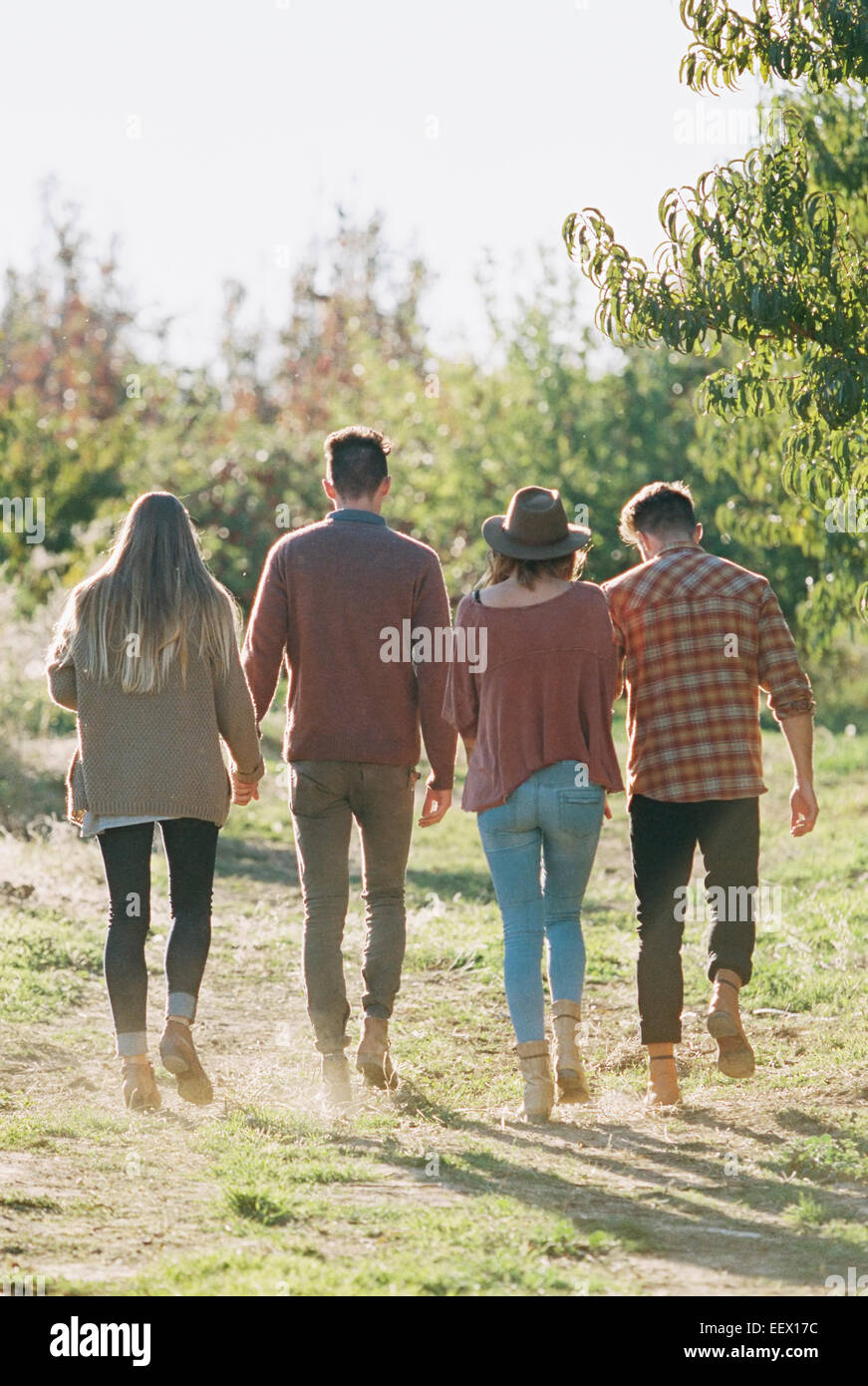 Apple orchard. Two couples walking along a path. - Stock Image
