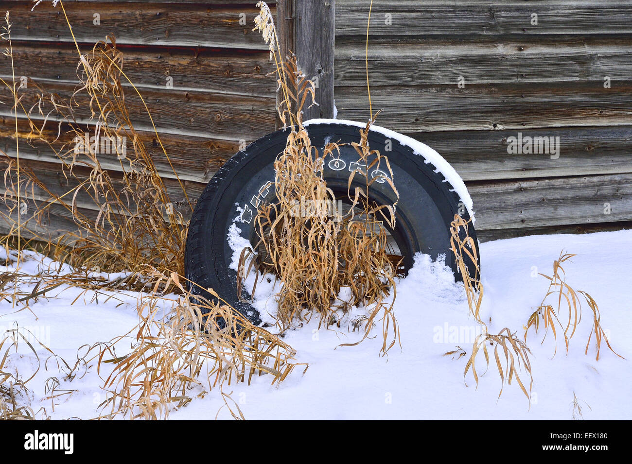 An image of a worn out rubber tire discarded by the corner of a wooden shed with snow and grass - Stock Image