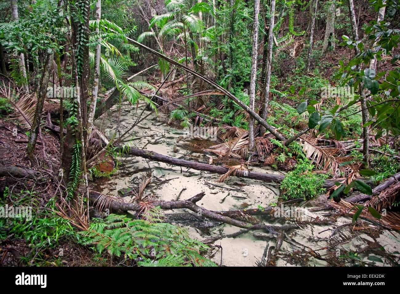 Creek in mangrove forest on Fraser Island, Queensland, Australia - Stock Image
