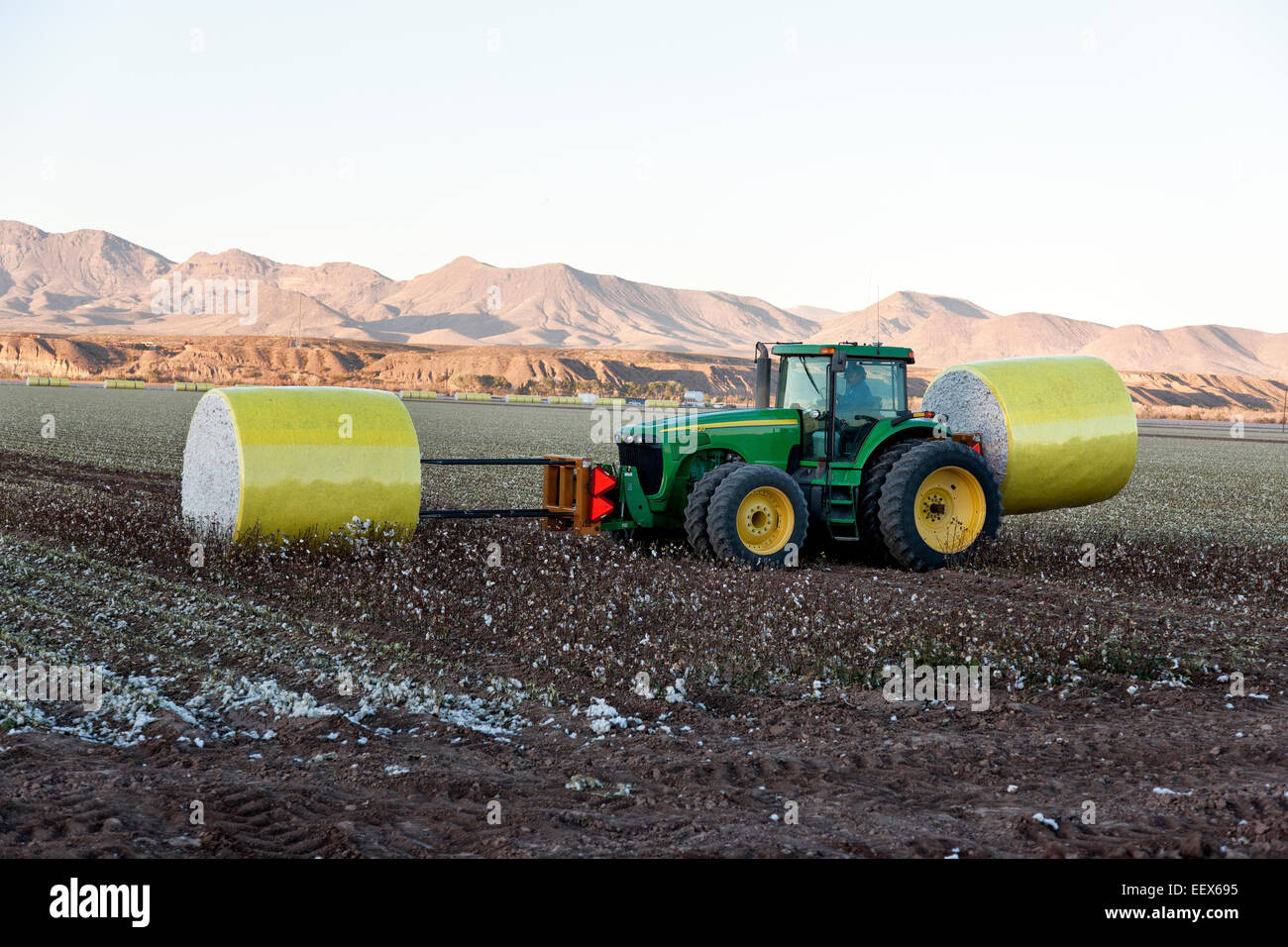 Tractor transporting harvested cotton modules. - Stock Image